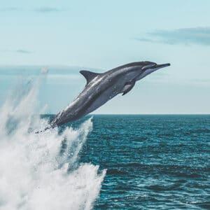 un dauphin qui saute en plein ciel