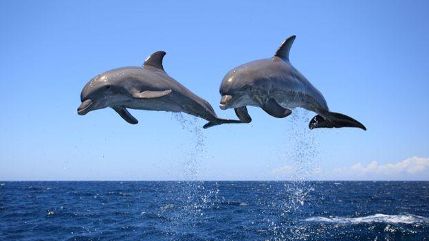 deux dauphins en plein envol au-dessus de la mer